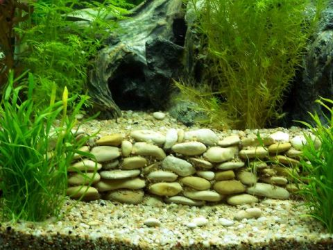faire decoration pour aquarium - visuel #9