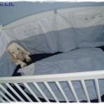 tour de lit bebe lit sans barreaux