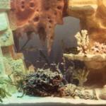 fabriquer une deco d aquarium